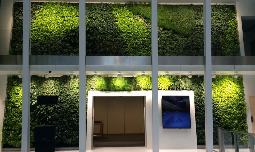 Növények a falon