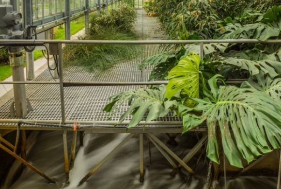 Makai Gábor: Élőgépes víztisztítómű, Dél-pesti Szennyvíztisztító