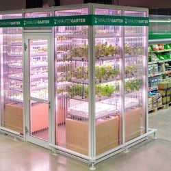 Urban farming: városban termett zöldségek